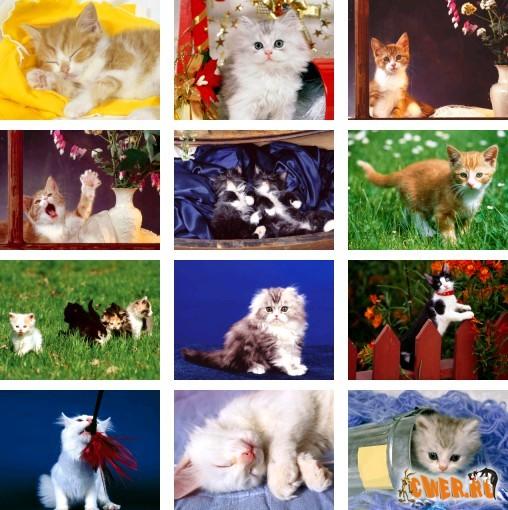 Котячий словарь. 1 часть.