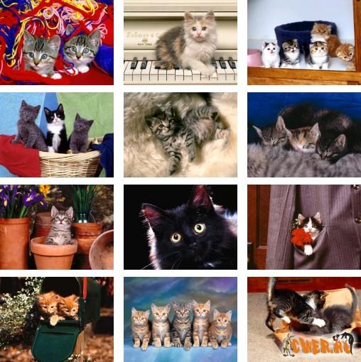 Котячий словарь. 2 часть.