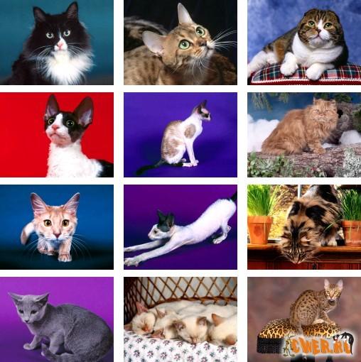 Котячий словарь. 3 часть.