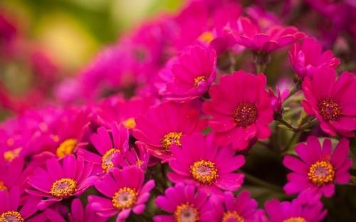 картинки на рабочий стол цветы самые № 517210 без смс