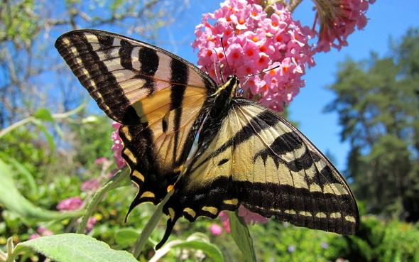 Животные насекомые растения природа