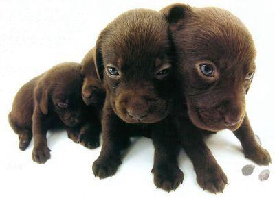 Собачки статуэтки интересные собачки